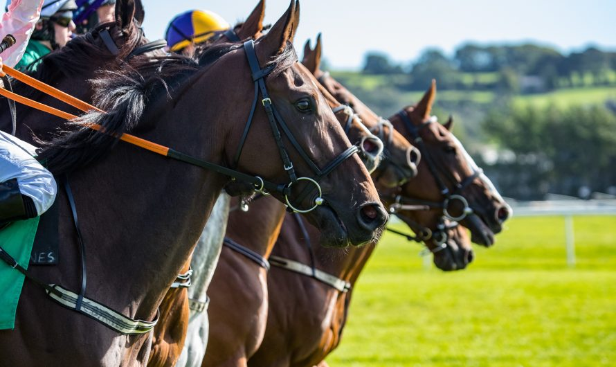 The Bookies Enemy – winning horse racing tipster with solid history