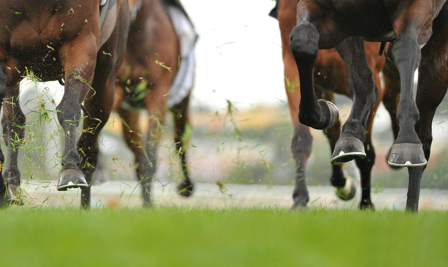 One Bet Racing – well researched daily horse racing tips and detailed analysis